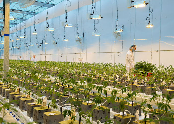 Greenhouse Plans Design Facility on wood greenhouse plans, small greenhouse plans, easy greenhouse plans, homemade greenhouse plans, hobby greenhouse plans, greenhouse ideas, winter greenhouse plans, attached greenhouse plans, pvc greenhouse plans, greenhouse cabinets, diy greenhouse plans, greenhouse layout, solar greenhouse plans, big greenhouse plans, greenhouse garden designs, backyard greenhouse plans, greenhouse architecture, lean to greenhouse plans, greenhouse windows, a-frame greenhouse plans,