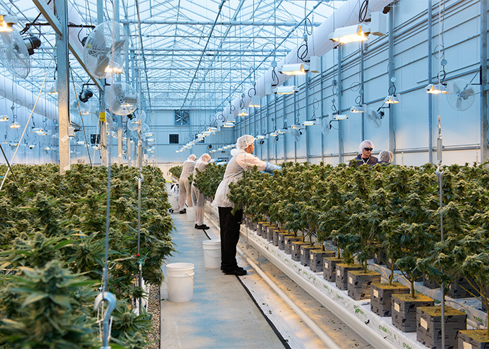 WeedMD Secures Health Canada Standard Processing Licence for its State-of-the-Art Strathroy Facility | website feature