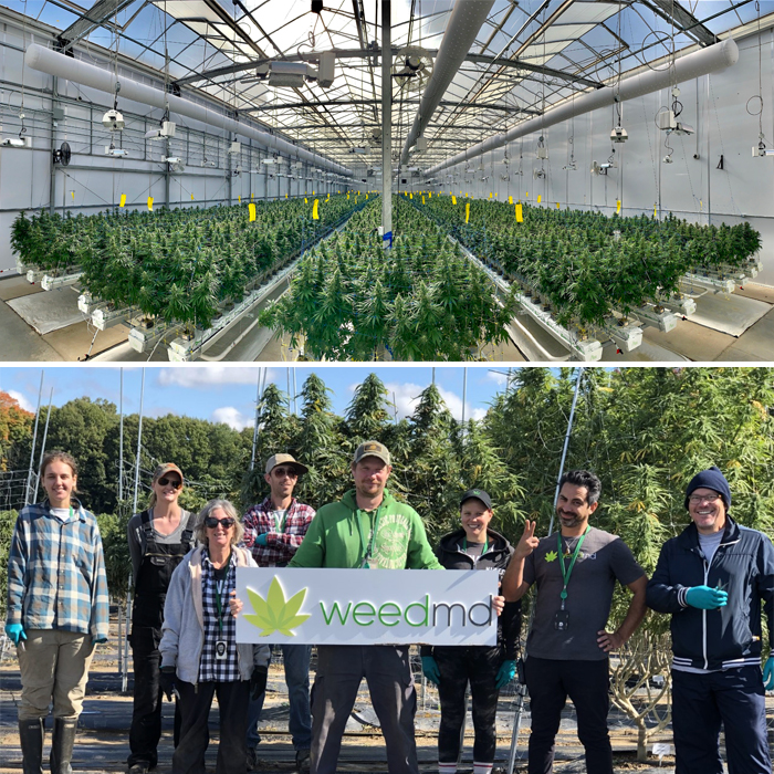 WeedMD greenhouse and cultivation team