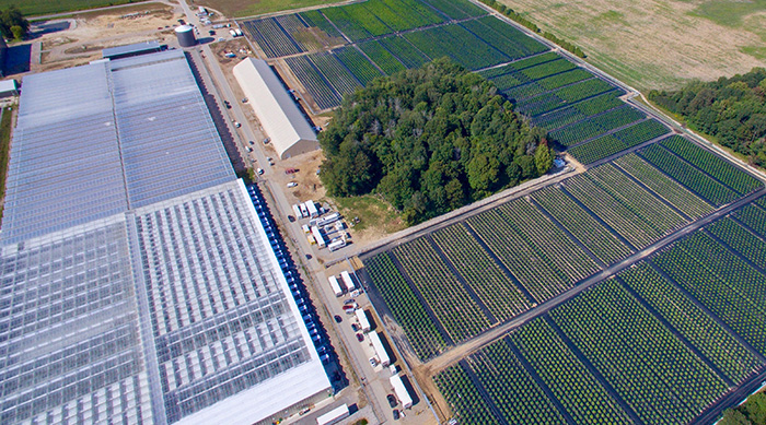 Aerial shot of WeedMD facility