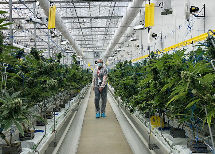 WeedMD Announces Participation in Upcoming Investor Events | website feature